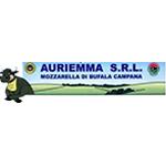 Auriemma