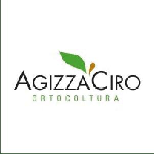 Agizza